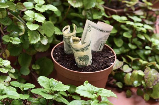 plantas_para_atraer_abundancia