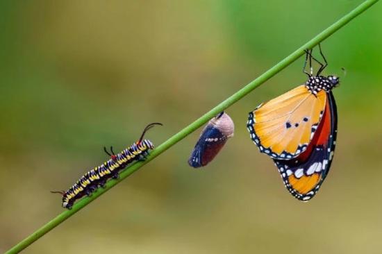 Mariposa - Metamorfosis