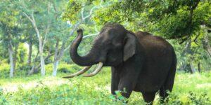 El elefante como amuleto de protección