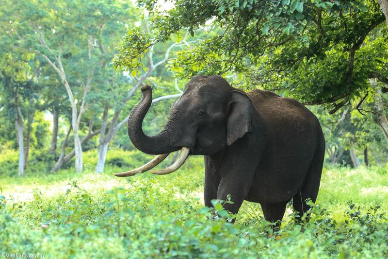 el elefante animal espiritual